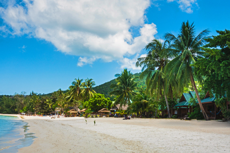 palm tree over white sand beach. Summer nature view.