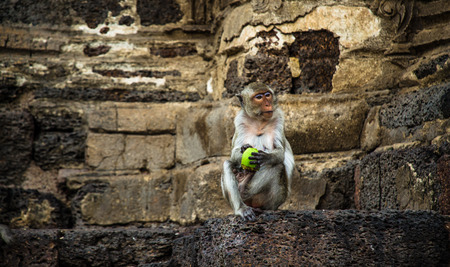 monkey holding a fruit photo