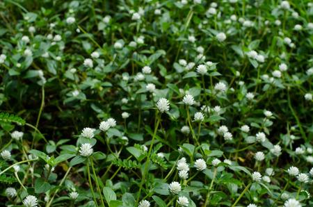 white flower in Grass fields photo