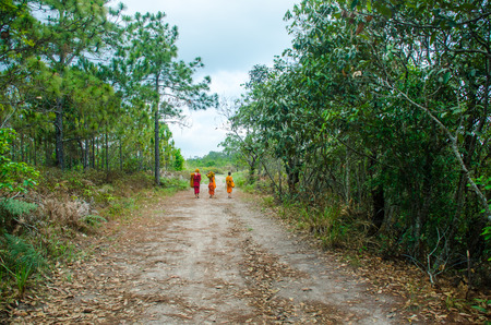 Sand road to the forest use in background photo