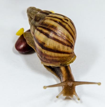 land slide: snail slow down on white background.
