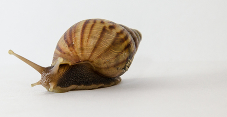 slithery: snail slow down on white background.