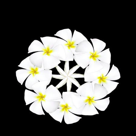 arabic number: Plumeria flower arabic number on black background Stock Photo