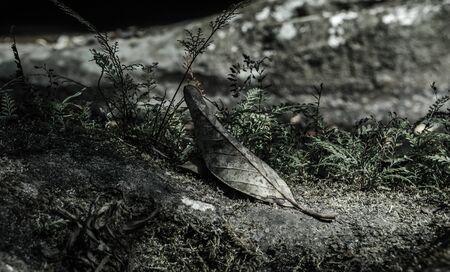 verdunkeln: trockene Blatt auf Gras mit verdunkeln Ton
