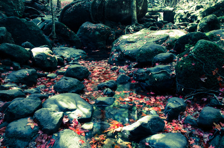 red maple leave around in forest photo
