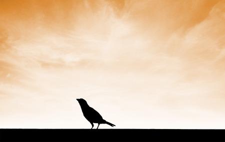 sunset sky: silhouette bird on ground with sunset sky