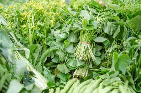 verduras verdes: Cierre de diversas verduras crudas