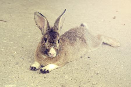 brown: Brown Bunny Stock Photo