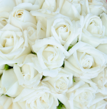 white wallpaper: Bunch of rose