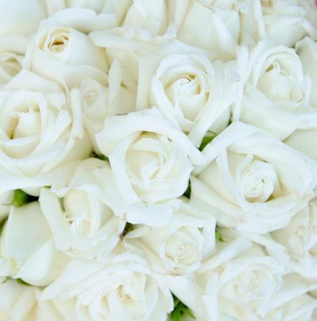 rosas blancas: Manojo de rosas