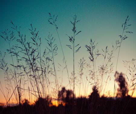 Grass flowers on sunset sky background