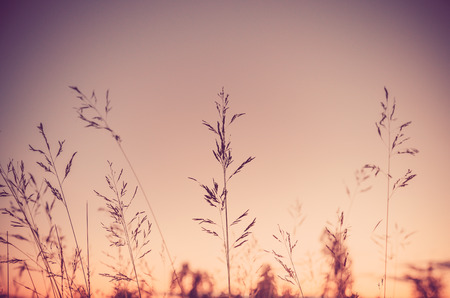Grass flowers sunset beautiful  sky background  process color tone