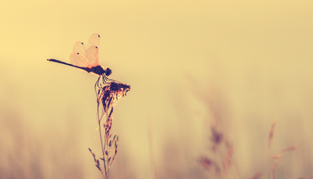 retro styled: retro styled of dragonfly on grass Stock Photo