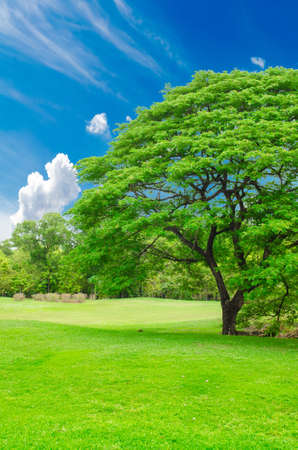 center position: green grass field in big city park Stock Photo