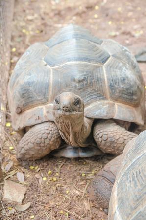Turtles on the ground
