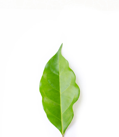 Green leaf texture. Leaf texture background top view