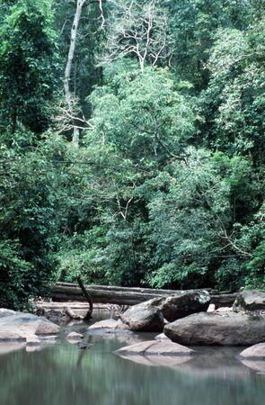 rainforest river Фото со стока