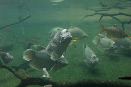 Underwater scene with big fishes photo