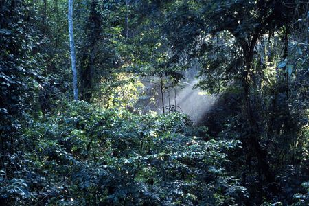 penetrating: Sun rays in tropical forest canopy Stock Photo