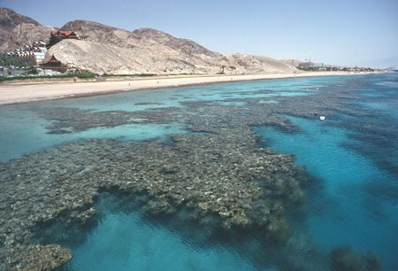 desert ecosystem: Coral reef in shallow water of Red Sea at Eilat, Israel