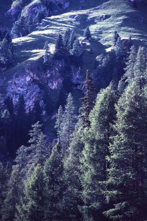 hillside: Hillside with Trees