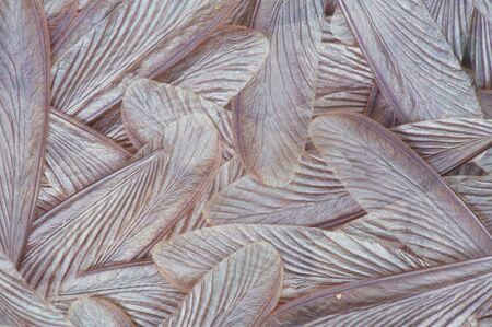 animal vein: Termite wings