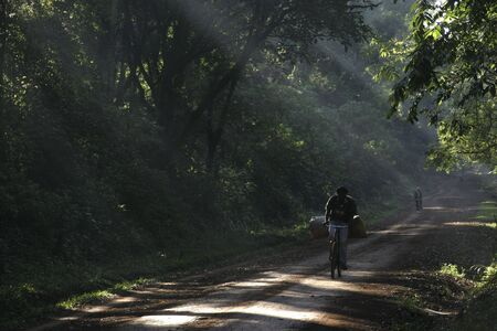 dirt road through rainforest in africa Banco de Imagens