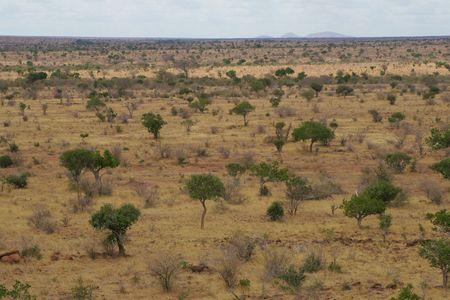 African Landscape of open savanna, Tsavo National Park, Kenya 写真素材