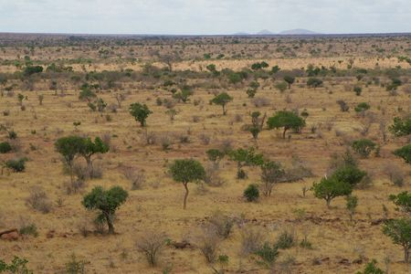 savana: African Landscape of open savanna, Tsavo National Park, Kenya Stock Photo