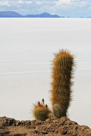 incahuasi: View of salt flats from Incahuasi Island in the middle of the famous Salar de Uyuni
