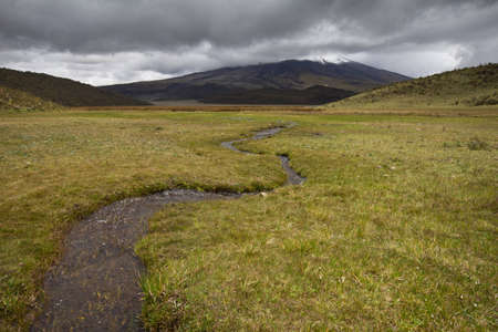 watershed: Paramo near Laguna Limpiopungo in Cotopaxi National Park, Andes, Ecuador