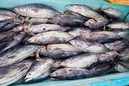 Boat full of fish freshly caught by fishermen in Ecuador Stock Photo - 12968070