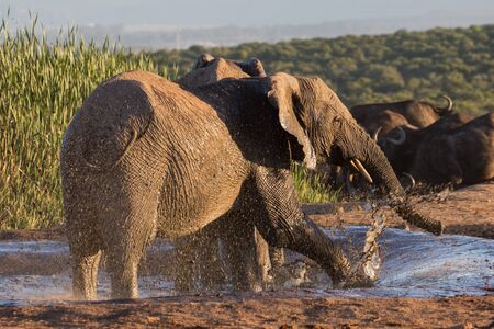 Elephant having fun at waterhole
