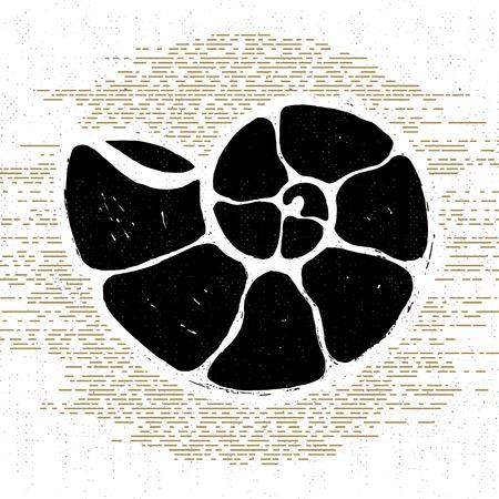 wanderlust: Hand drawn textured vintage icon with seashell vector illustration.