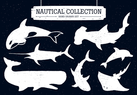 cachalot: Hand drawn nautical collection of fish and sea inhabitants on black background. Dolphin, white shark, killer whale, cachalot, hammer-head, swordfish, and ramp.