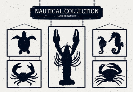 Hand drawn nautical collection of crabs, seahorse, turtle, and cancer. 矢量图像