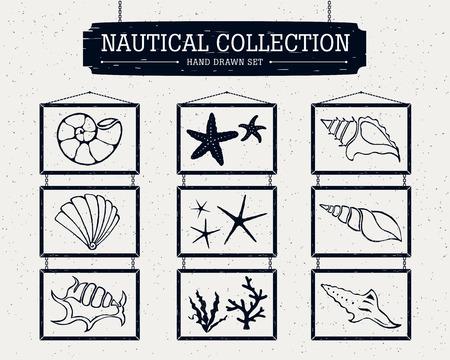 estrella de mar: Dibujado a mano la colección náutica de conchas, estrellas de mar y algas.