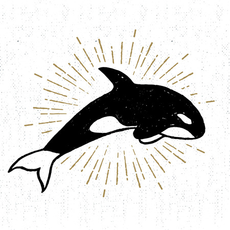 killer whale: Hand drawn textured icon with killer whale vector illustration.
