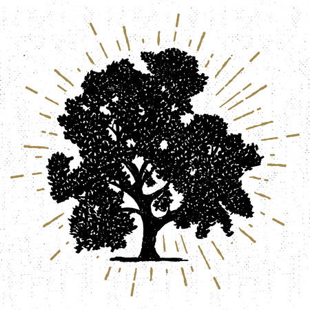 oak trees: Hand drawn icon with a textured oak tree vector illustration.