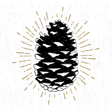 Hand drawn icon with a textured fir cone vector illustration. 일러스트