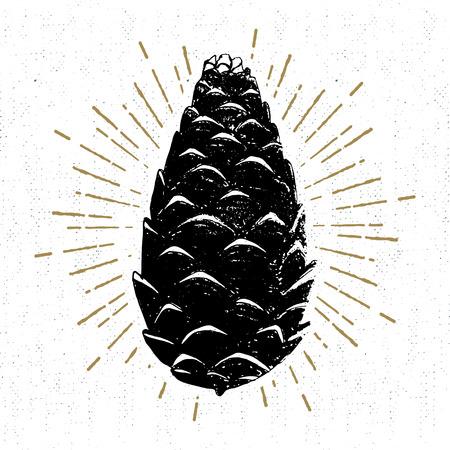 손으로 그려진 된 아이콘 질감 된 소나무 콘 벡터 일러스트 레이 션.