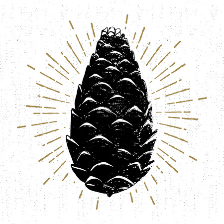 Hand drawn icon with a textured pine cone vector illustration.