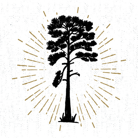 ponderosa: Hand drawn icon with a textured pine vector illustration.