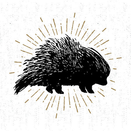 Hand drawn icon with textured porcupine vector illustration. 矢量图像