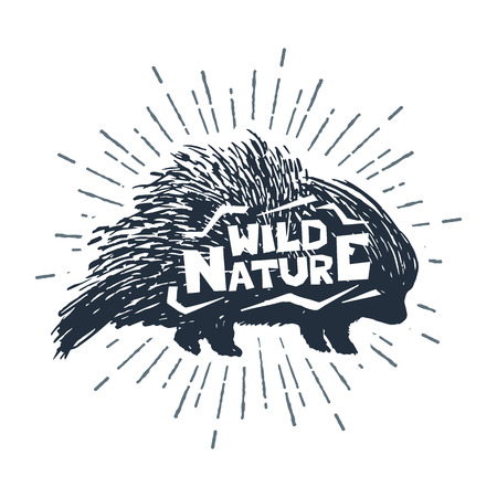 porcupine: Hand drawn label with textured porcupine vector illustration and Wild nature inspirational lettering. Illustration
