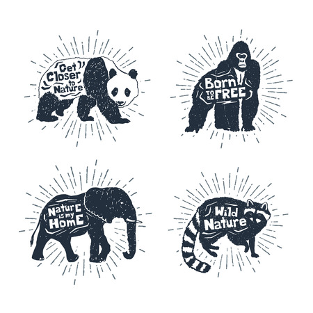 raccoon: Hand drawn textured vintage badges set with panda, gorilla, elephant, and raccoon vector illustrations, and inspirational lettering. Illustration