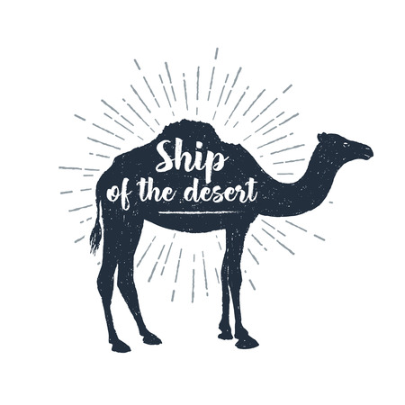 Hand drawn label with textured camel  illustration and Ship of the desert lettering.