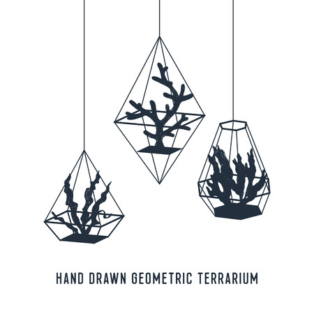 Hand drawn nautical badge with seaweed in terrariums textured vector illustration. Geometric style.
