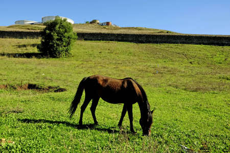 animals, horses, nature, in, beauty, group, mare, grass photo