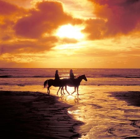 desert animals: Horseriding sulla spiaggia al tramonto Archivio Fotografico
